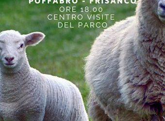 Dall'Allevamento delle Pecore La Lana: Rifiuto o Risorsa?