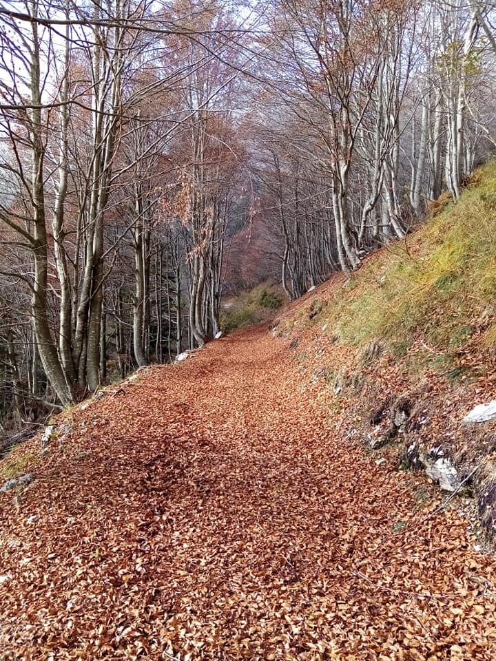 Bosco in Val Colvera - foto di Mauro Romagnoni - Nov.2019